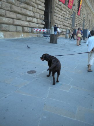 Strolling in Florence