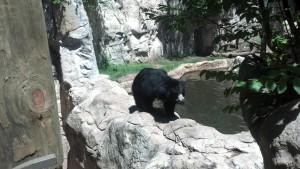 Sloth bear!